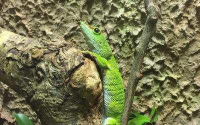 Terrariet – Reptile Zoo